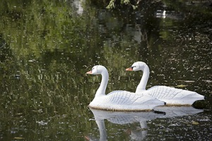 Fake Swans Provide Campground Ambience