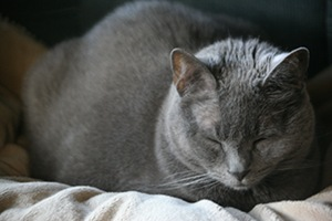 Buddy Sleeping in Arkona, Ontario