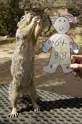 Flat Stanley Watching Ancient Indigenous Dance as Re-enacted by Squirrel