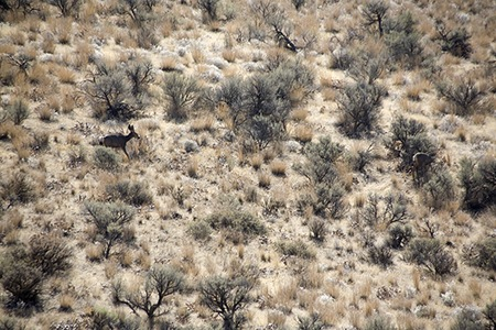Dry Falls - Find the Deer